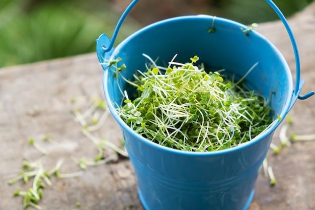 Крупный план cuted пусканных ростии рукколы microgreen в ведре.