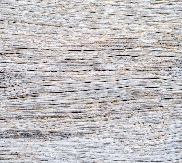 죽은 나무 줄기 자연 질감 표면의 근접 촬영