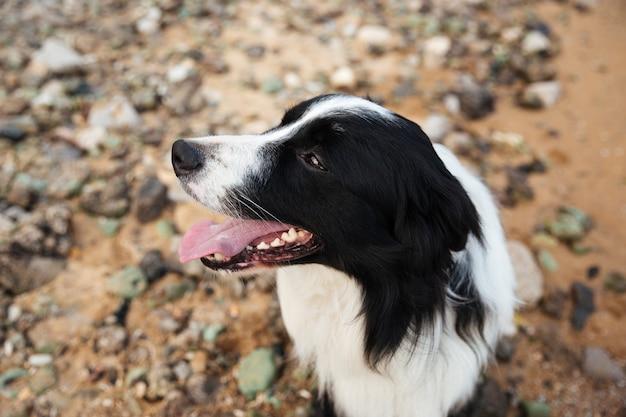 海辺に座っている犬のクローズアップ