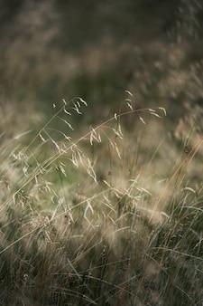 乾いた草の背景のクローズアップ