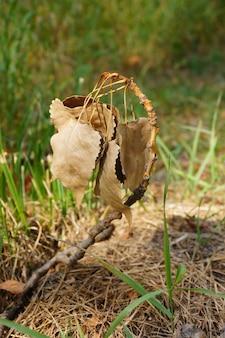 日光の下でフィールドの草に囲まれた乾燥した葉のクローズアップ