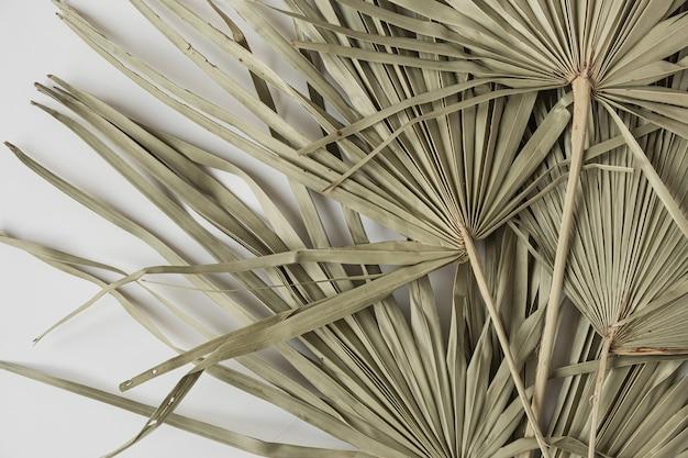 乾燥した熱帯のヤシの葉の孤立したパターンのクローズアップ