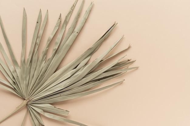 건조 열대 야자 잎의 근접 촬영입니다. 복숭아 창백