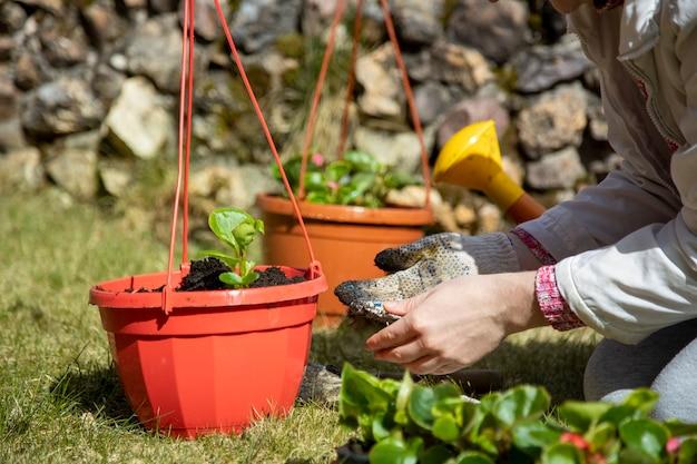 緑の牧草地の屋外ポットに花を植える家庭用手袋の女性の手のクローズアップ