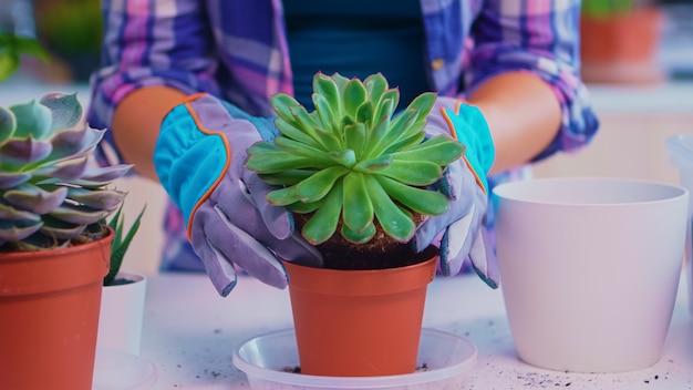 ジューシーな花を保持している花屋の手のクローズアップ。シャベル、手袋、肥沃な土壌、花を使って観葉植物を植え替え、自宅のキッチンのテーブルの近くで家の装飾をします。