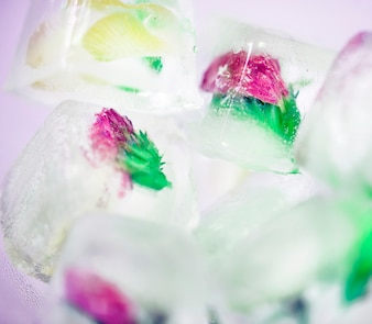 Closeup of flowers in ice cubes