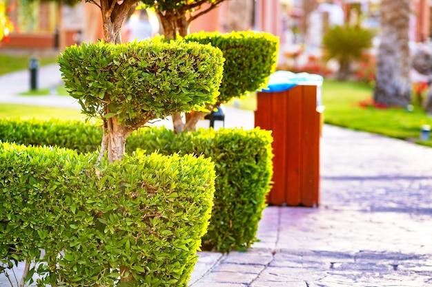 木の幹と夏の庭で成長している鮮やかな緑の葉と新緑常緑低木のクローズアップ。