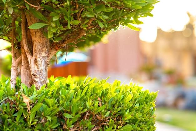 木の幹と夏の庭で成長している鮮やかな緑の葉と新鮮な緑の木のクローズアップ。