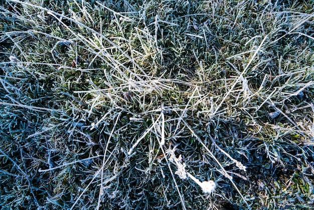 Крупным планом замороженные лезвия травы, вид сверху