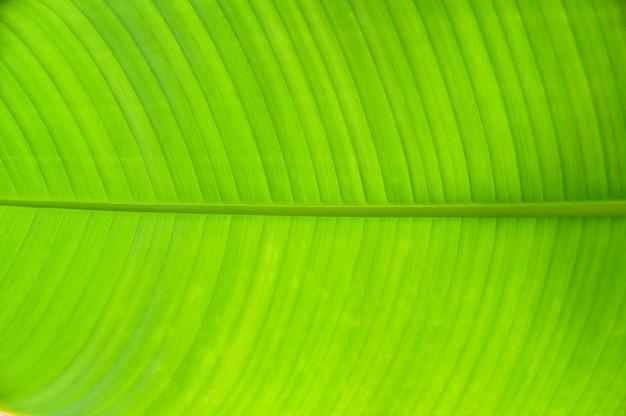 緑のバナナの葉のテクスチャの抽象的な背景のクローズアップ