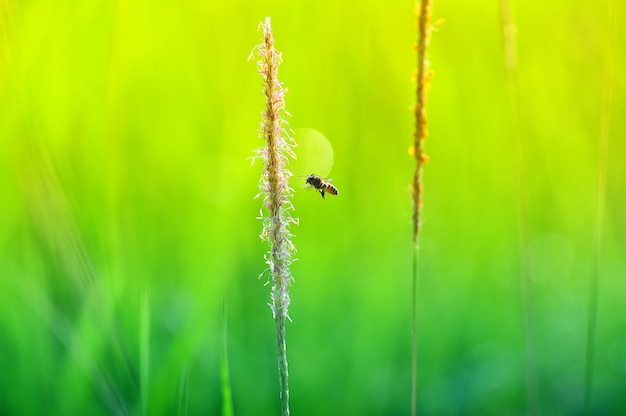 Крупный план зеленой травы