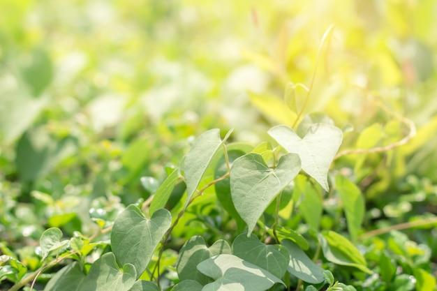 庭の緑の葉のクローズアップ
