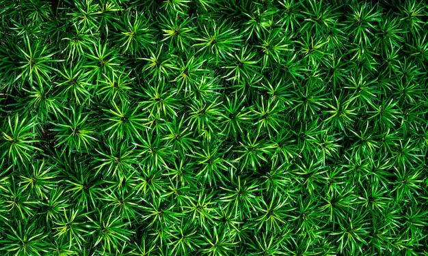 緑の葉のクローズアップテクスチャ背景。有機概念のジャングルの中で美しいパターンを持つ緑の葉。熱帯庭園の天然植物。自然の背景。ブッシュバックグラウンドで小さな緑の葉。