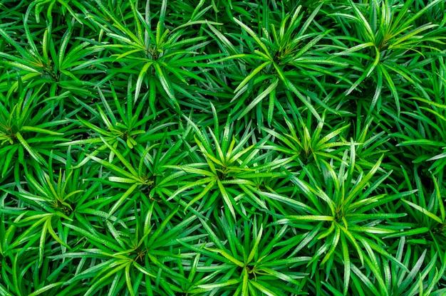 緑の葉のクローズアップテクスチャ背景。有機コンセプトのジャングルの中で美しいパターンを持つ緑の葉
