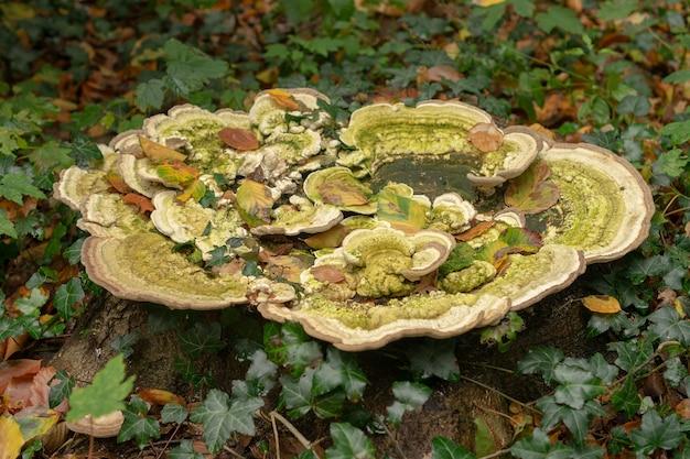 잔디와 잎으로 둘러싸인 성장에서 자라는 녹색 버섯 균류의 근접 촬영