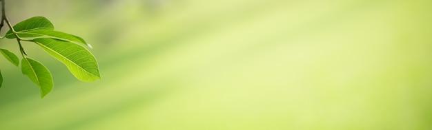 背景の表紙の概念として使用してボケとコピースペースと庭のぼやけた緑の背景に緑の自然の葉のクローズアップ。