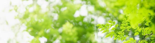 背景として使用してボケとコピースペースと庭のぼやけた緑の背景に緑の自然の葉のクローズアップ