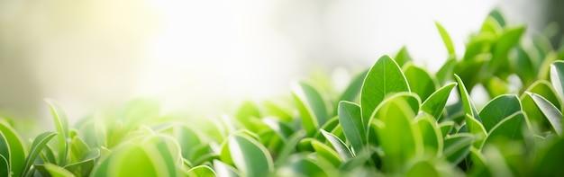 ボケとコピースペースと庭のぼやけた緑の背景に緑の自然の葉のクローズアップ