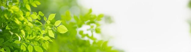 나뭇잎과 복사 공간 정원에서 흐린 녹지 배경에 녹색 자연 잎의 근접 촬영