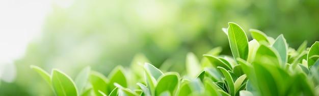 ぼやけた緑の背景に緑の自然の葉のクローズアップ