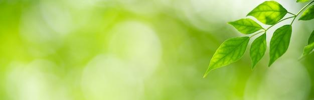 ぼやけた緑の背景に緑の自然の葉のクローズアップ。