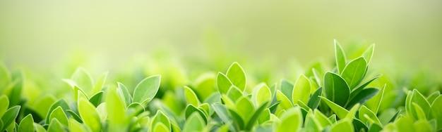 庭のぼやけた緑に緑の自然の葉のクローズアップ