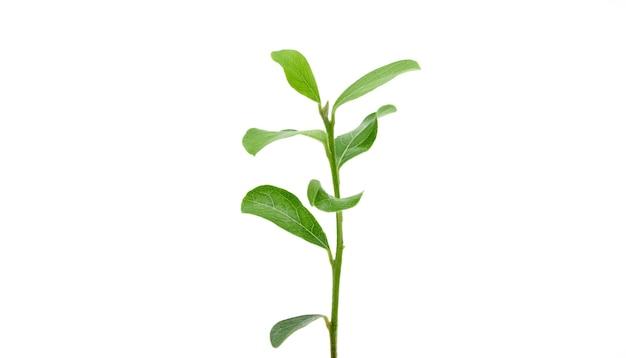 Крупным планом зеленой природы молодые побеги лист вырез на белом фоне