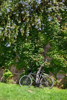 녹색 나무와 자전거의 근접 촬영