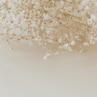 ニュートラルベージュのカスミソウの花の花束のクローズアップ