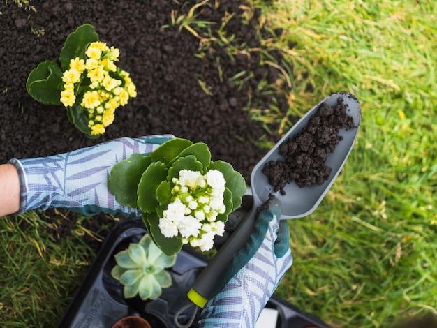 シャベルと苗木の土壌を保持する手の拡大