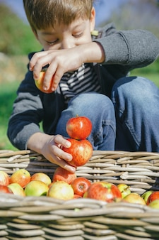 과일 수확이 있는 고리버들 바구니 위에 신선한 유기농 사과를 가지고 노는 행복한 귀여운 아이의 클로즈업. 자연과 어린 시절 개념입니다.