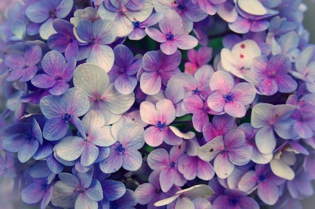 Hortensia花、アジサイ抽象花の背景の拡大。