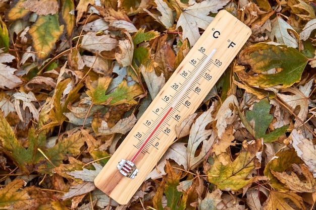 Крупным планом бытовой термометр на кленовых листьях, показывающий температуру в градусах цельсия
