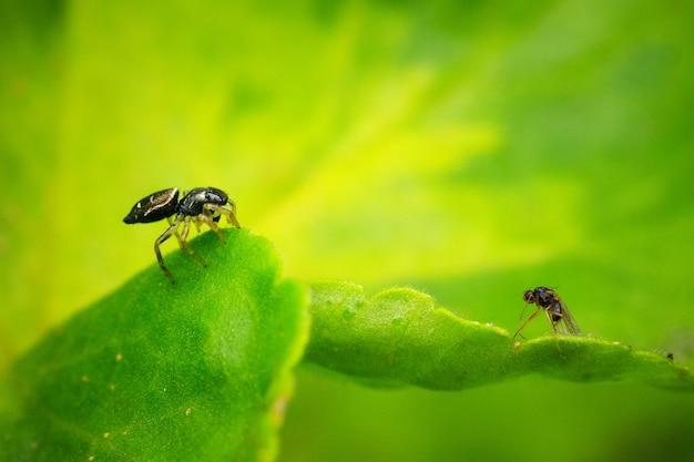 햇빛 아래 필드에 녹색 잎에 곤충의 근접 촬영