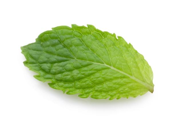 白い背景の分離の新鮮なスペアミントの葉のクローズアップ。スペアミントまたはペパーミントは、アイスクリームキャンディフルーツのフレーバーに使用されるハーブで、チューインガムや歯磨き粉のアルコール飲料を保存します。