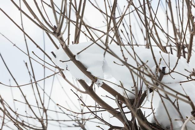 나무의 큰 가지의 근접 촬영 눈으로 덮여있다. 무료 사진