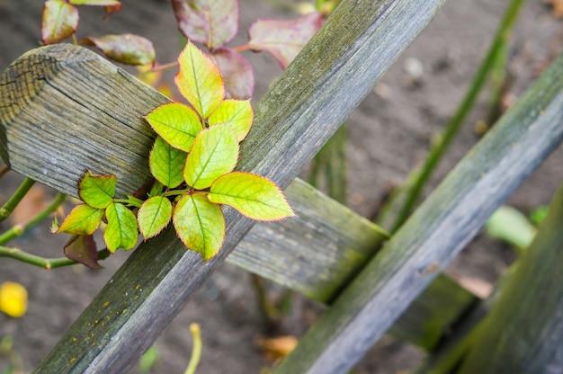 ライトの下で木製のフェンスの葉のクローズアップ