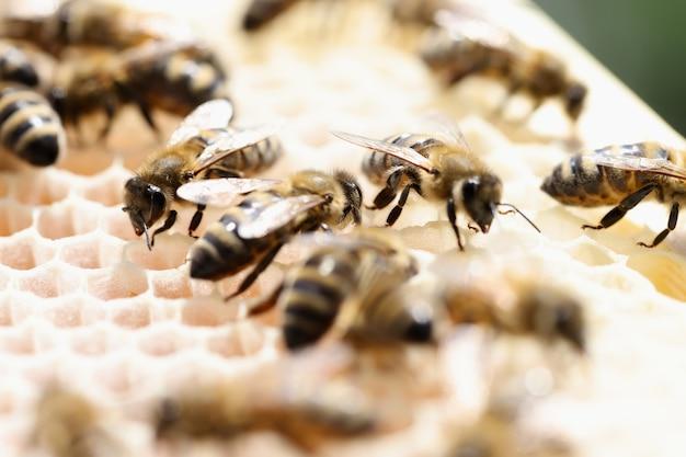 Крупный план многих медоносных пчел на сотах. концепция сельского хобби пчеловодства