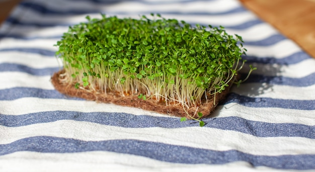 집에 있는 머스타드 아루굴라와 다른 식물의 마이크로그린 클로즈업