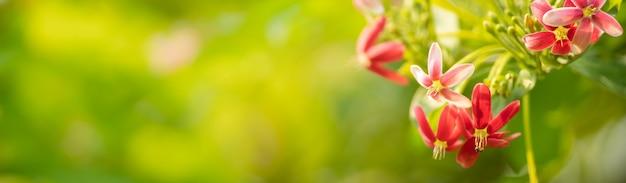 Крупным планом мини-розово-красный цветок на размытом фоне грин, используя в качестве фона естественный пейзаж растений