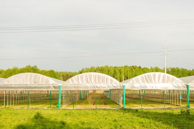 青い空を背景に現代の温室複合施設のクローズアップ。販売のための有機植物の栽培。