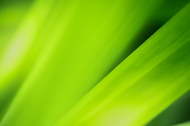 自然の緑の葉と緑の背景をぼかした写真と日光のクローズアップ