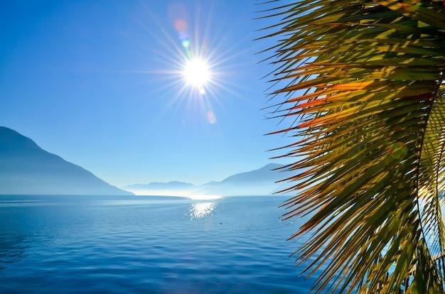 日光と青い空の下で海と山々に囲まれたヤシの木の葉のクローズアップ
