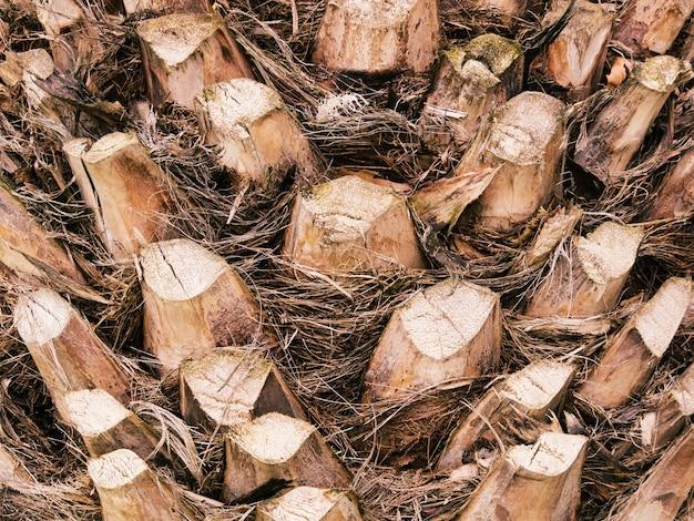 ヤシの幹や蒸気のテクスチャのクローズアップ。自然の熱帯の背景