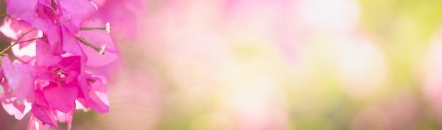 ピンクのブーゲンビリアの花のクローズアップ