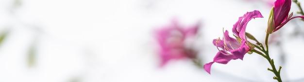 Крупным планом розовый цветок с белым небом как фон под солнцем