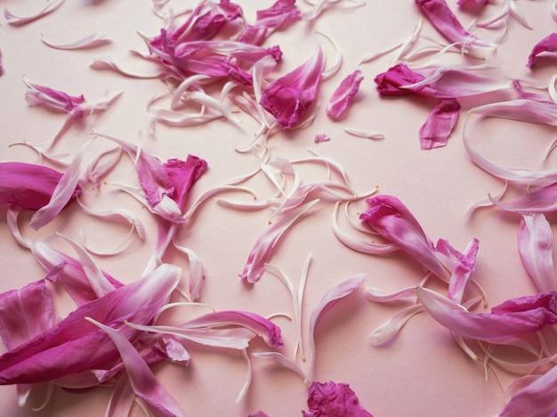 ピンクの牡丹の花びらのクローズアップ。あなたのデザインのための自然な柔らかい背景。