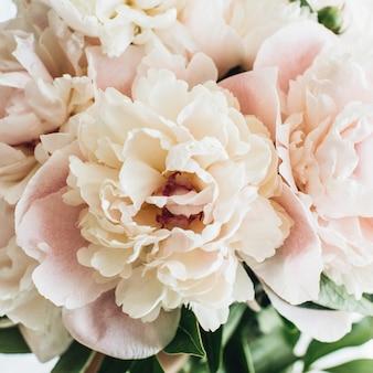 Крупным планом розовые цветы пиона на белой поверхности