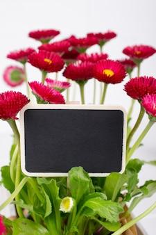 暗い庭の銘板とピンクの春の繊細な小さなベリスデイジーの花のクローズアップ