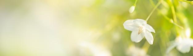 ぼやけた緑の背景に白い花の花粉のクローズアップ